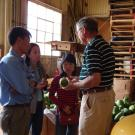 Researchers in packing shed discuss postharvest practices of papaya.
