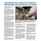 fact sheet- photo of hand holding potato roots, with headline: Targeting soil health to reduce nematodes on Guatemalan farms