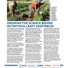 fact sheet- Growing the science behind nutritious, leafy vegetables