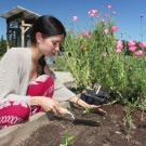 student planting at UC Davis demonstration center for Horticulture Innovation Lab